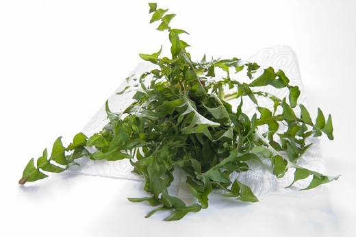 Fresh dandelion leaves on kitchen roll : Stock Photo