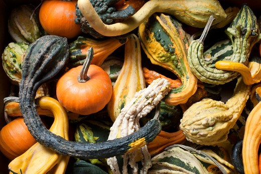 Various Gourds From Farmer's Market in New Jersey : Stock Photo