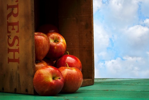 Stock Photo: 1532R-60375 Farm Fresh Apples Spilling from a Crate