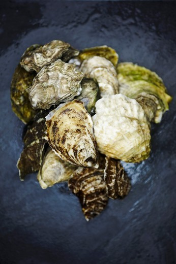 Stock Photo: 1532R-60988 Assorted Fresh Oysters