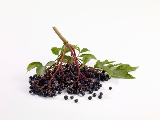 Elderberries on a white surface : Stock Photo