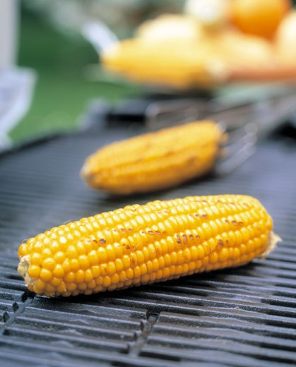 Stock Photo: 1532R-8462 Barbecued corncobs