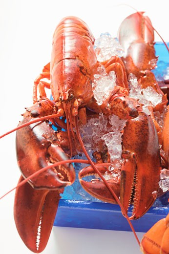 Lobster on crushed ice : Stock Photo
