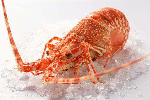 Spiny lobster on crushed ice : Stock Photo