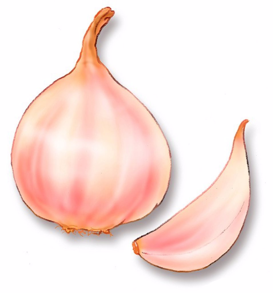 A bulb and a clove of garlic : Stock Photo