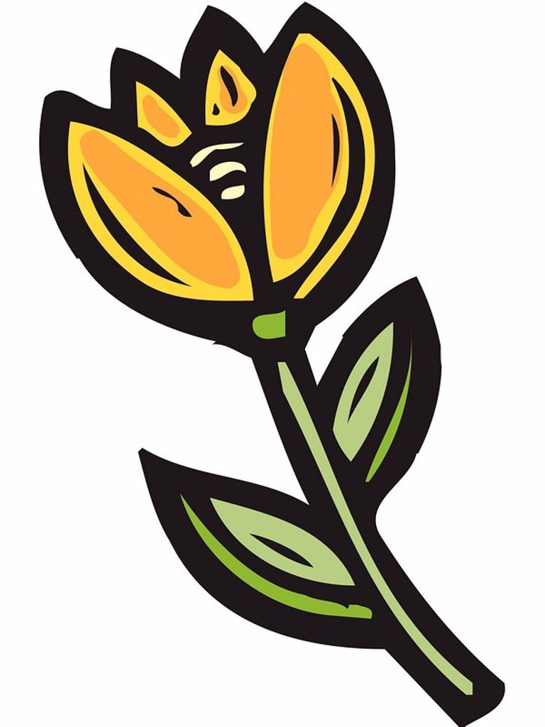 Illustration of a yellow tulip : Stock Photo