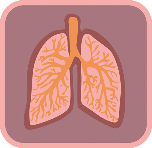 Illustration of lungs : Stock Photo