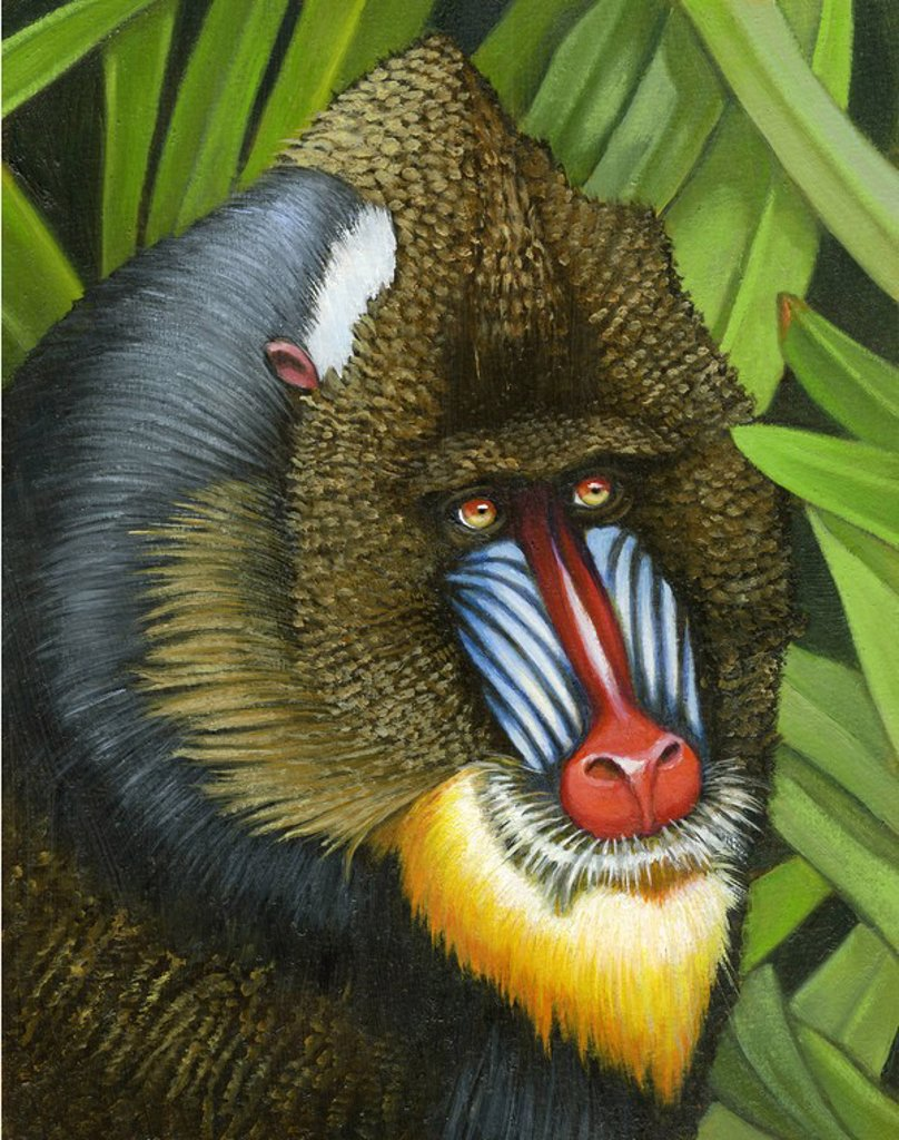 Stock Photo: 1538R-52823 Illustration of a mandrill