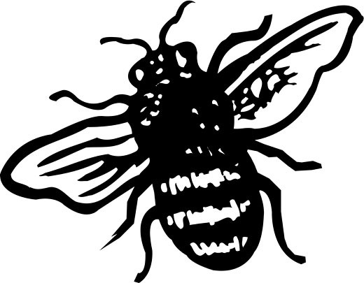 A black and white illustration of a bee : Stock Photo