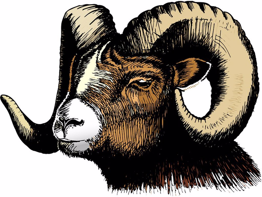 Stock Photo: 1538R-60903 An illustration of a ram