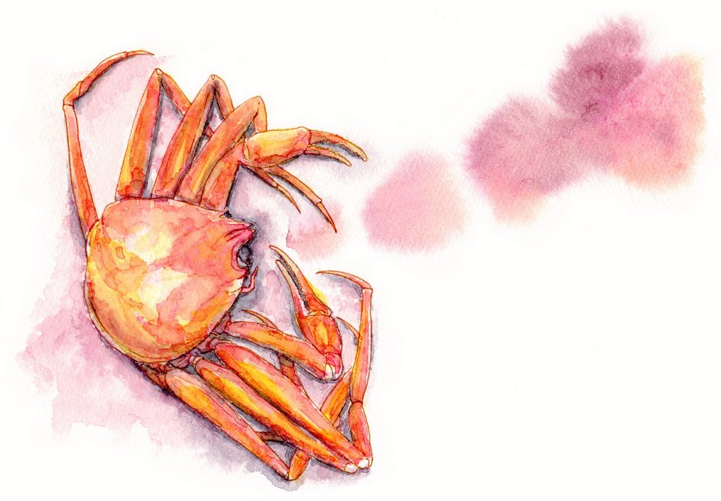 Stock Photo: 1538R-66616 A painting of a crab