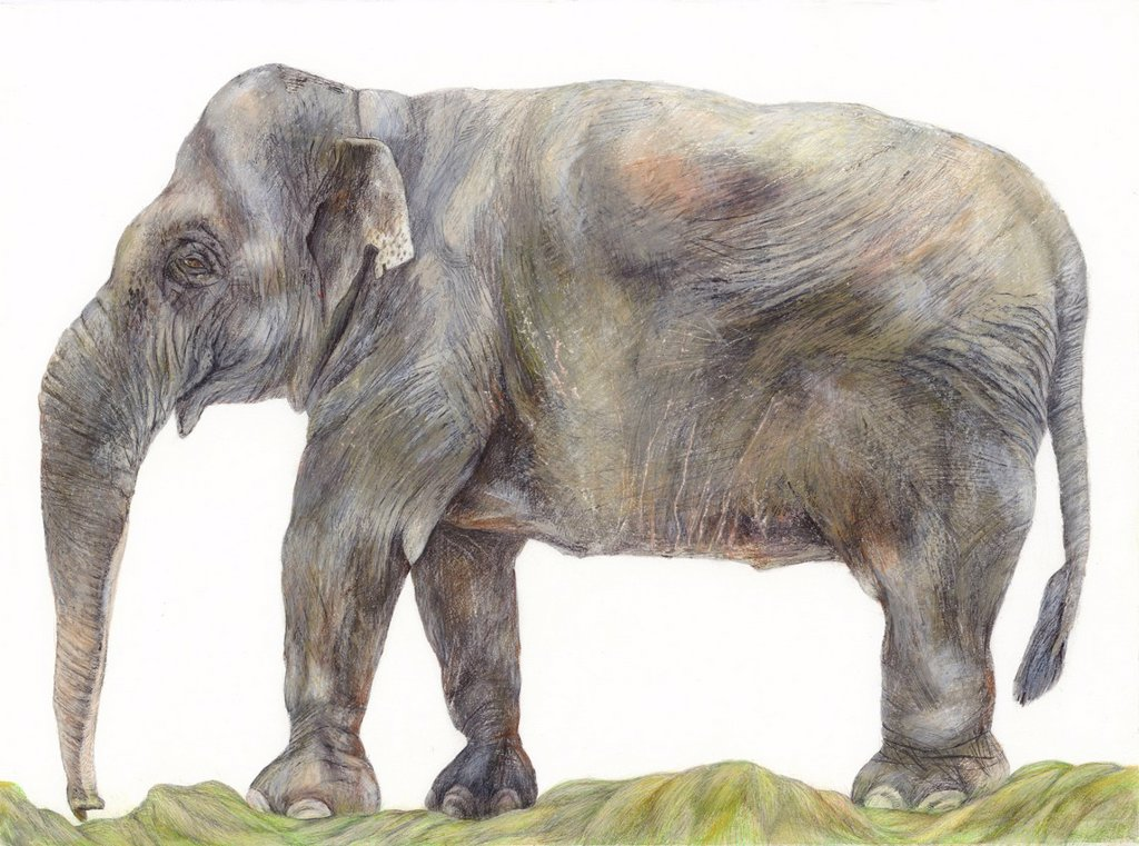 Stock Photo: 1538R-66781 An illustration of an Elephant