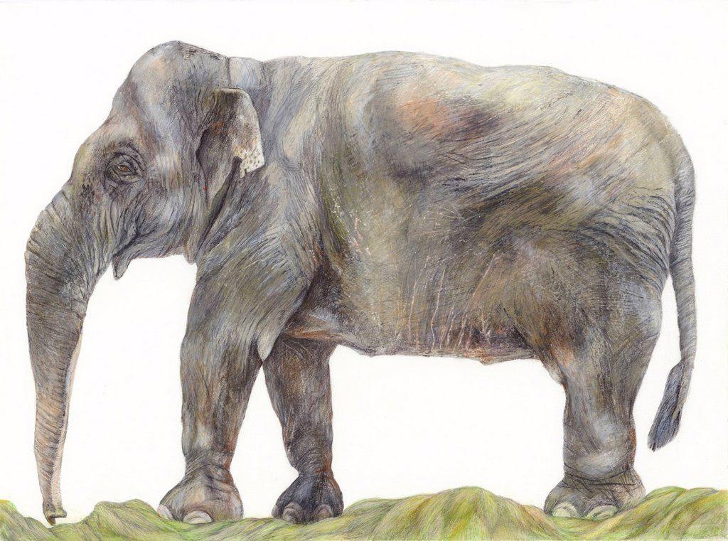 An illustration of an Elephant : Stock Photo