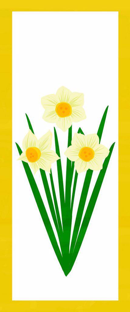 Stock Photo: 1538R-66940 Illustration of three daffodils