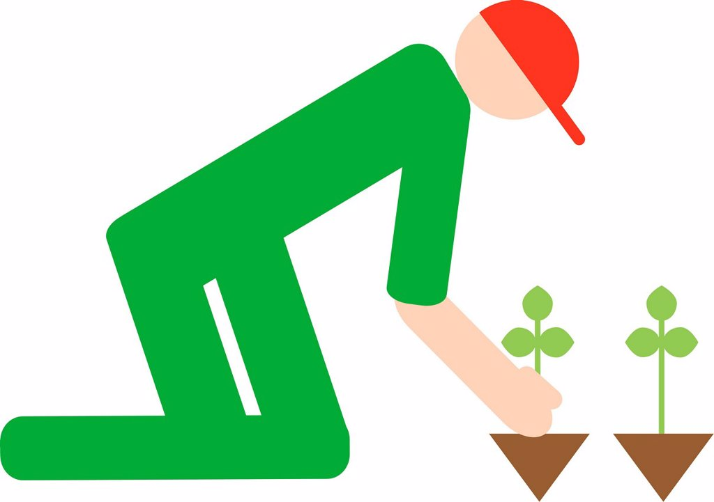 A man planting seedlings : Stock Photo