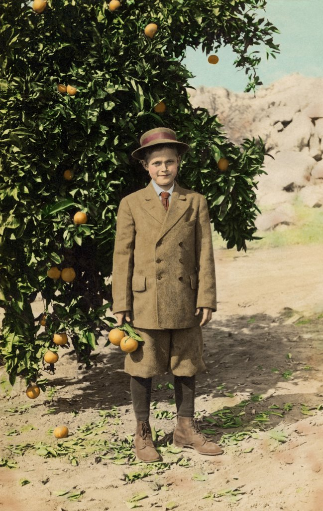Stock Photo: 1539-174 Portrait of a boy standing near an orange tree and smiling, c.1910