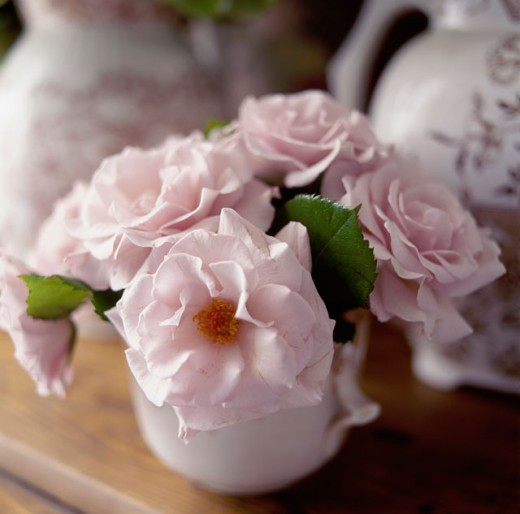 Close-up of flowers in a vase : Stock Photo