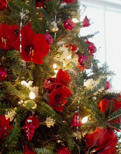 Close-up of a Christmas tree decorated with flowers and Christmas lights : Stock Photo