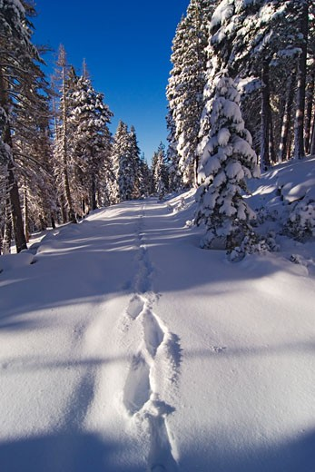 Footprints on a snow covered road, Lake Tahoe, California, USA : Stock Photo