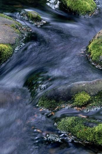 Stock Photo: 1555R-100062 Babbling brook