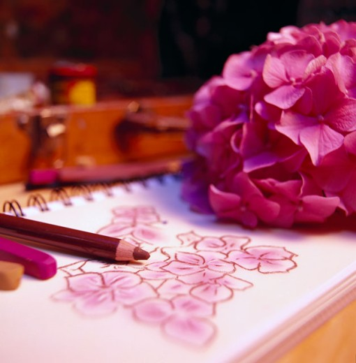 Stock Photo: 1555R-10025 Sketch of flowers