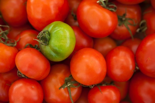 red tomatoes with one green one for sale at the Campo de' Fiori market : Stock Photo
