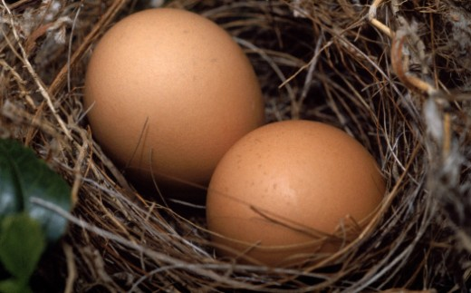 Stock Photo: 1555R-103085 Nest of eggs