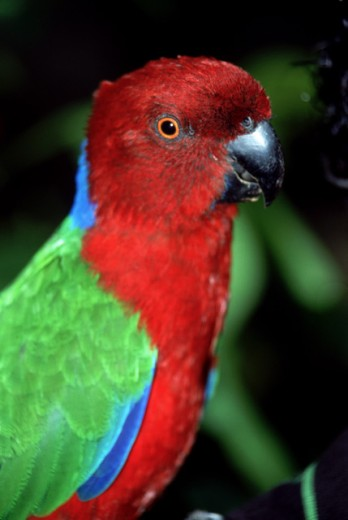 Colorful parrot : Stock Photo