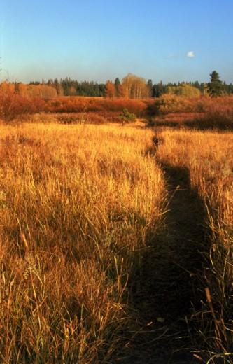 Path through grassland : Stock Photo