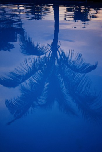 Stock Photo: 1555R-158075 Palm tree reflection, Ft. Lauderdale, Florida