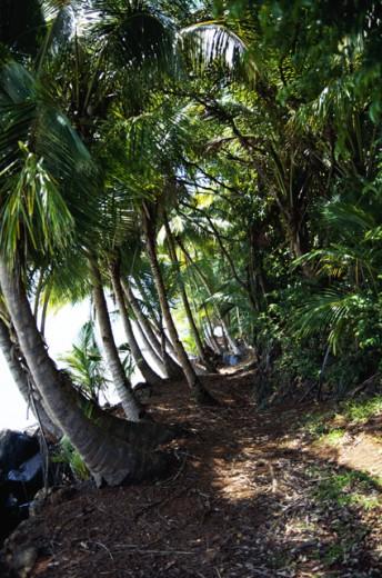 Trees, French Guyana : Stock Photo