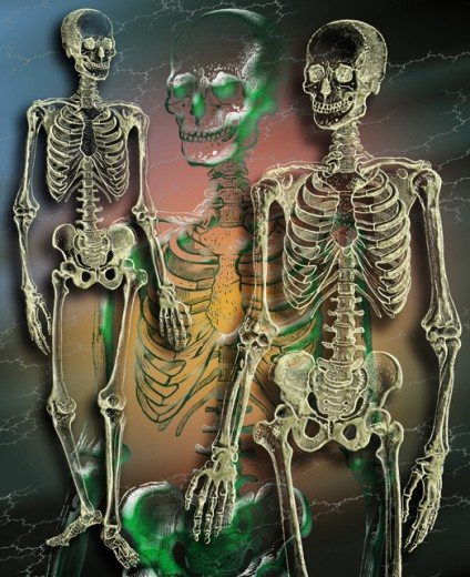 Stock Photo: 1555R-165042 Skeletons