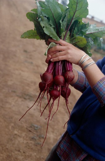 Woman holding beets : Stock Photo