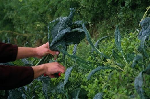 Woman gardening : Stock Photo