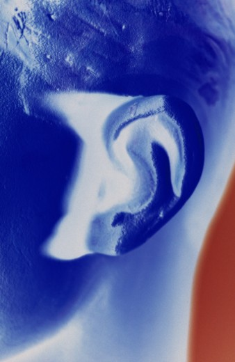 Ear : Stock Photo
