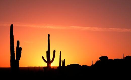 Desert silhouette : Stock Photo