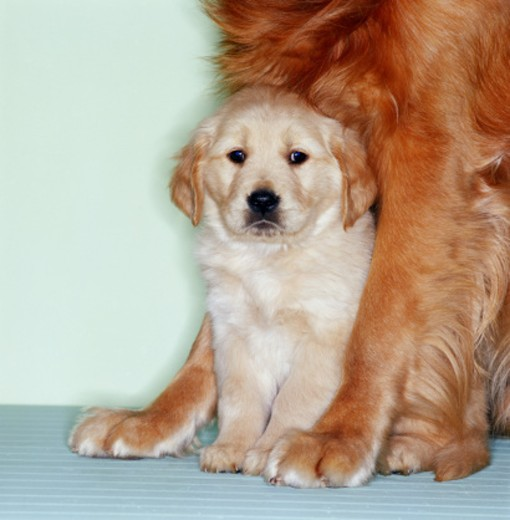 Puppy with mother : Stock Photo