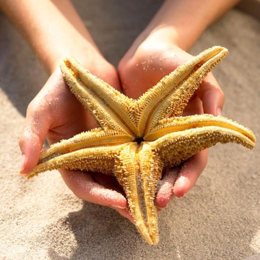 Hands holding starfish : Stock Photo