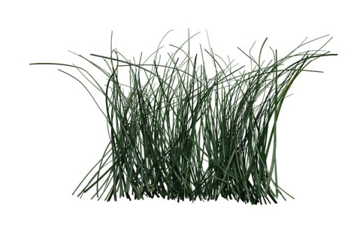 Stock Photo: 1555R-28072 Grass