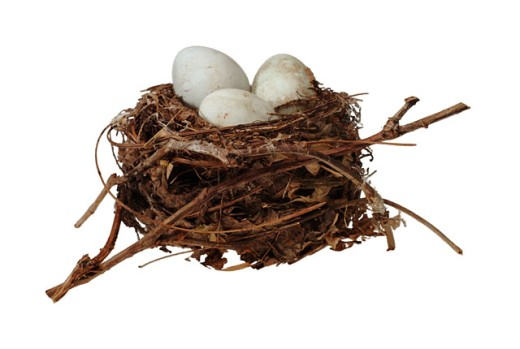 Unhatched eggs in a nest : Stock Photo