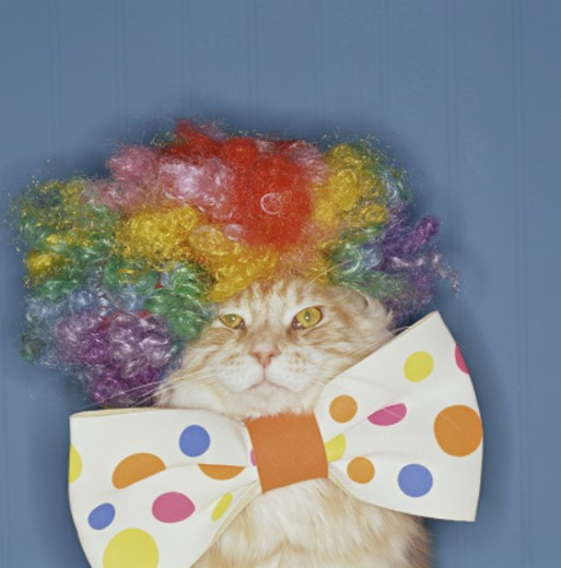 Stock Photo: 1555R-282012 Cat dressed up at clown