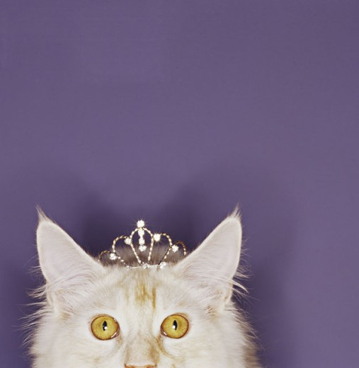 Stock Photo: 1555R-282023 Cat wearing tiara