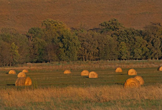 Kansas field with rolled hay : Stock Photo