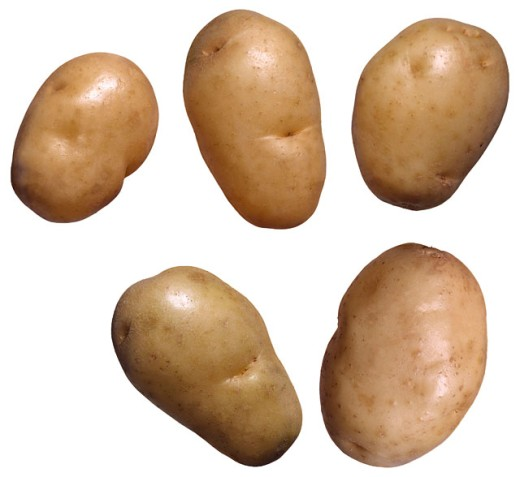 Stock Photo: 1555R-29041 White rose potatoes