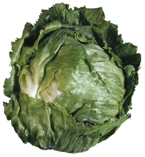 Iceberg lettuce : Stock Photo