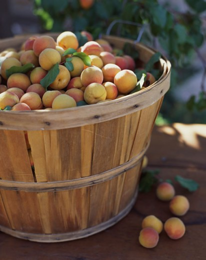 Stock Photo: 1555R-304417 Basket of Apricots