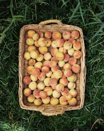 Stock Photo: 1555R-304655 Basket of Peaches