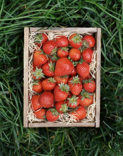Strawberries in Crate : Stock Photo
