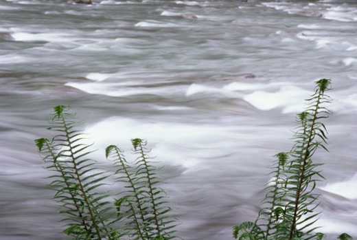 Ferns by flowing stream : Stock Photo