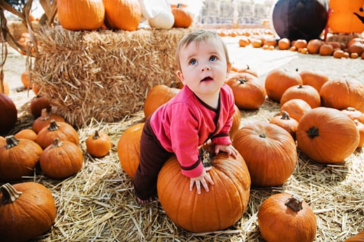 Baby girl in pumpkin patch : Stock Photo